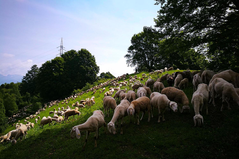 Monte Due Mani e Pecore